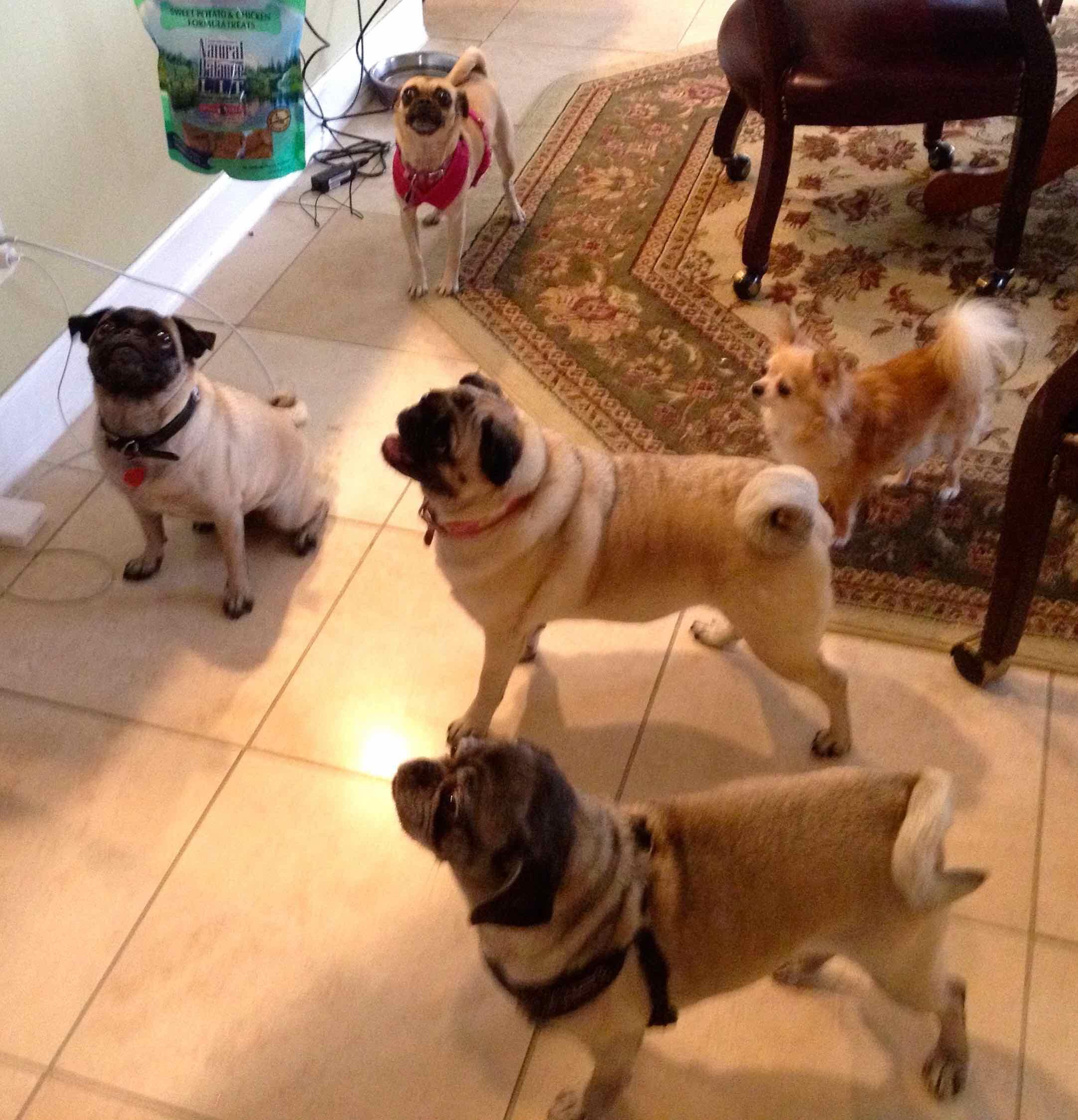 Barkley, Bootsie, Diddy, Bella, Lola